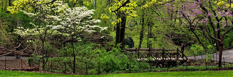 central park may 2014.jpg
