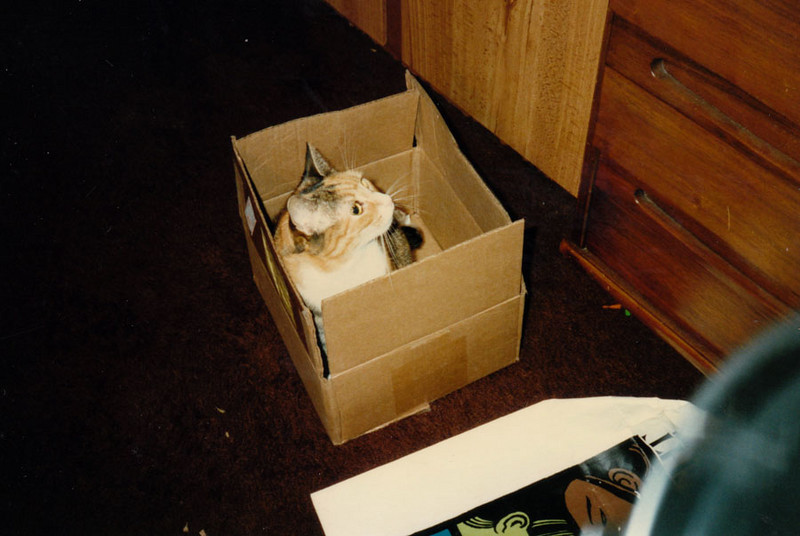 CAT-IN-THE-BOX Just what is it about a box that so fascinates cats? I don't know, either, but Katrina loved them.