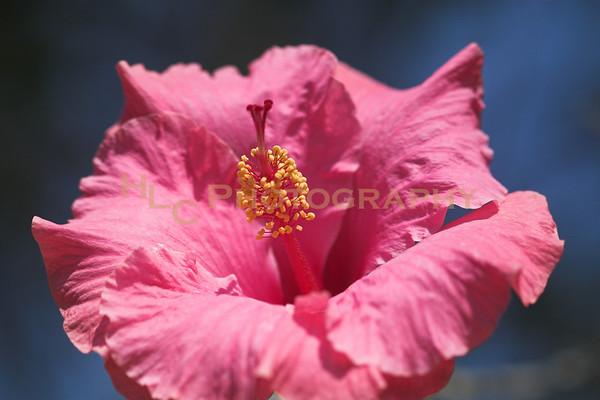 Arboretum, Pasadena, CA - flowers