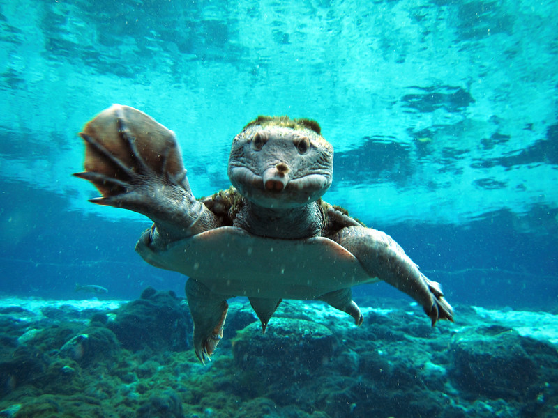 9_18_19 Underwater Picture Of Turtle.jpg