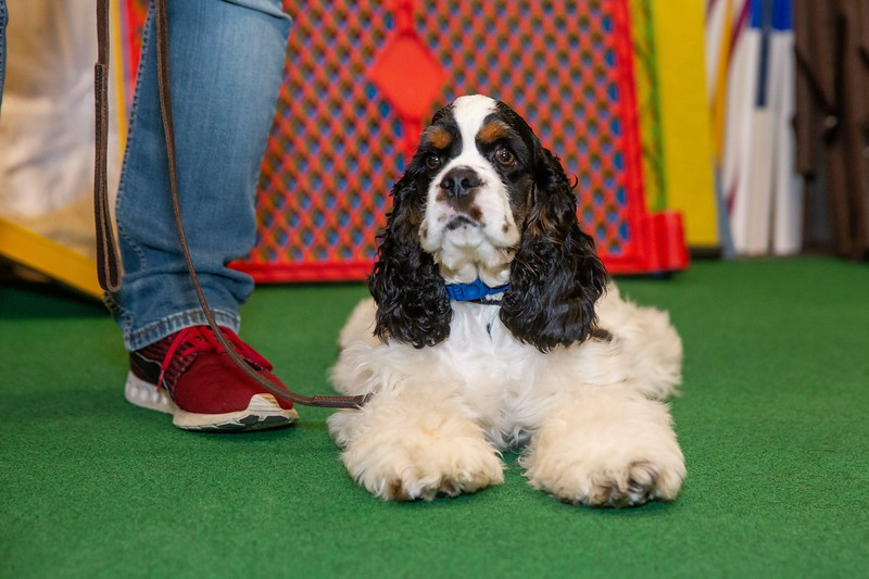 on Command dog Training June 2019-5156.jpg