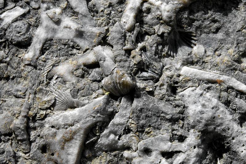 Ordovician-fossils-bryozoans2-ark-encounter-kentucky-williamstown.jpg