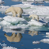 Polar Bear family<br /> Polar Bear (ursus maritimus) mother and her cubs walking on the pack ice, Svalbard, Norway