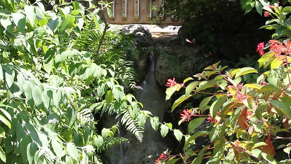 2013-05-25...Butterfly World...coconut creek florida