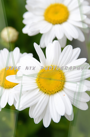 Flowers,Barns,Scenery