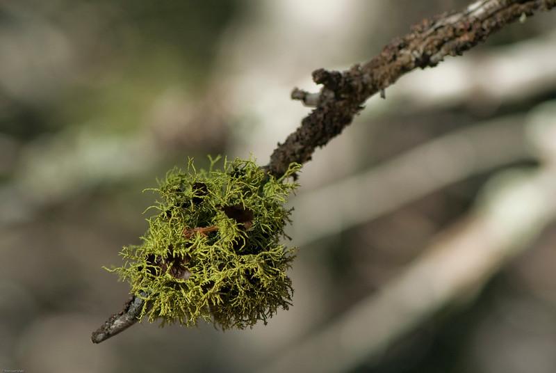 Bozeman Lichens-23.jpg