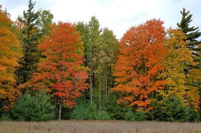 Fall Colors 2005