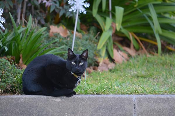 2012-01-01 Random Cats