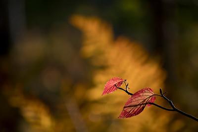 Autumn 2019