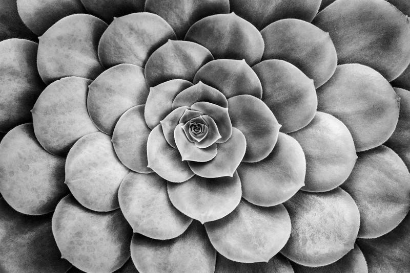 Sarah-Marino-BW-Dinner-Plate-Succulent-1200px.jpg