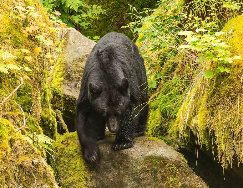Anan Bears 18.jpg