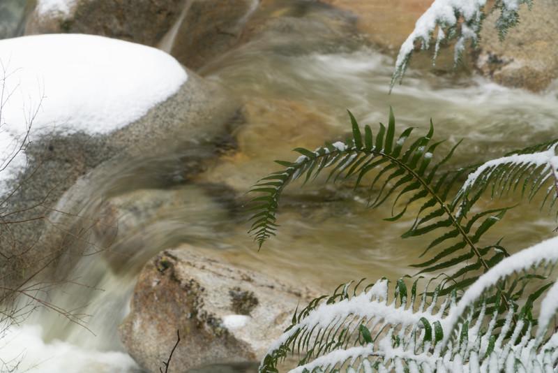 19_02_03 snow day in north van 0093.jpg