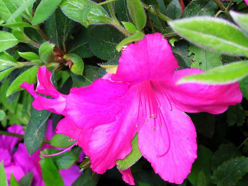 carolina flower 071.jpg