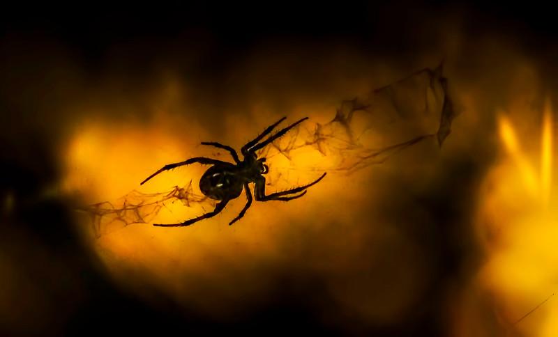 Spiders-Arachnids-145.jpg