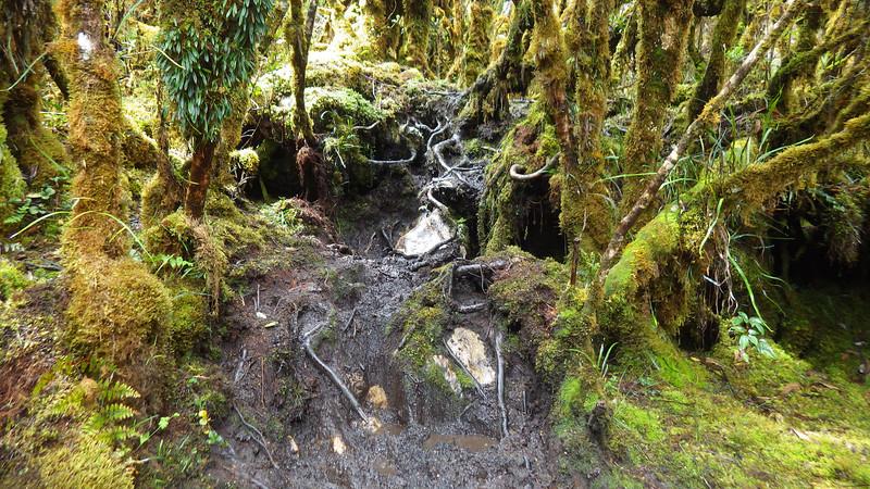 Papua jungle 2