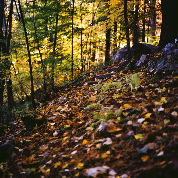 Autumn Hike 120 Film-00023.jpg