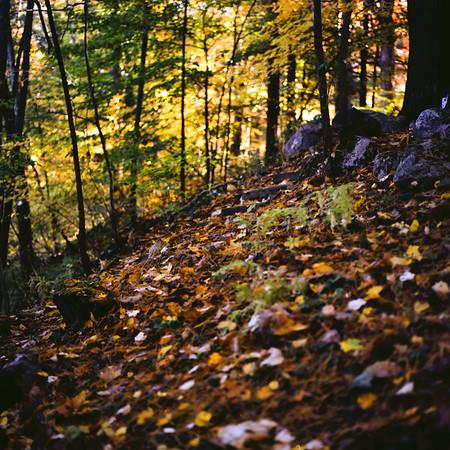 Richfield County Park Medium Format Film