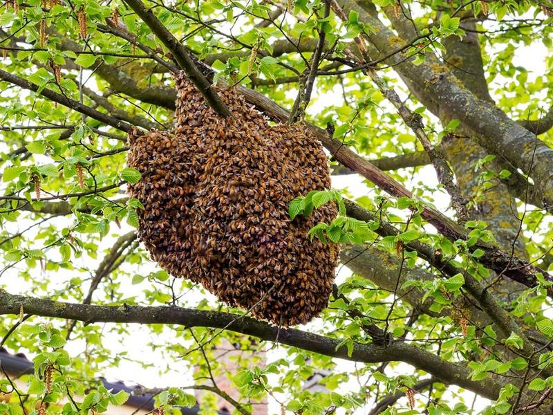 honey bee hive.jpg