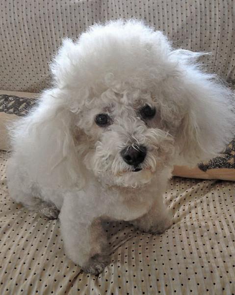 Cody before grooming