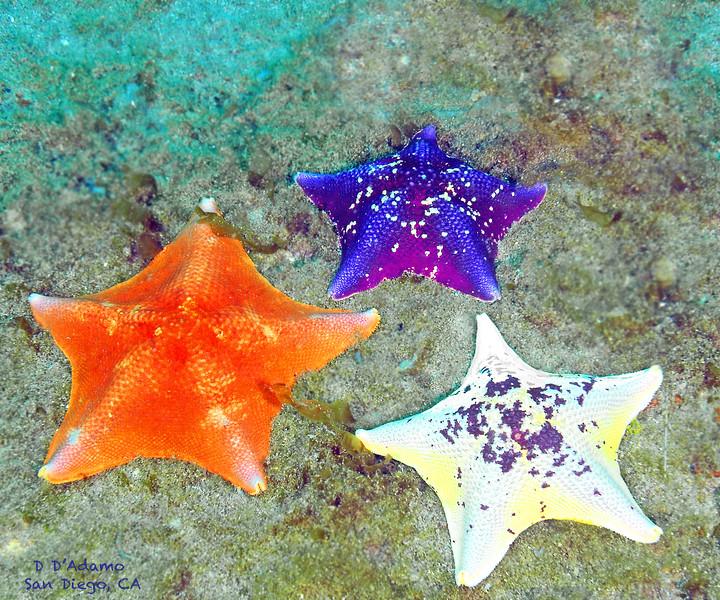 3 stars Coronado