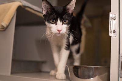 Animals 1-25-2017 plus Pet vet calendar