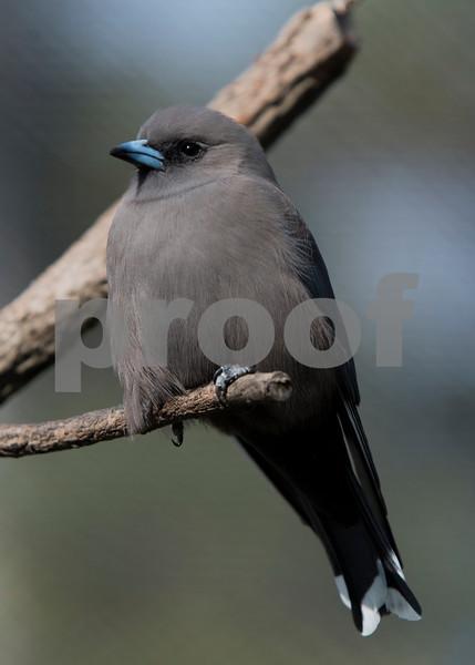 birds 21.jpg