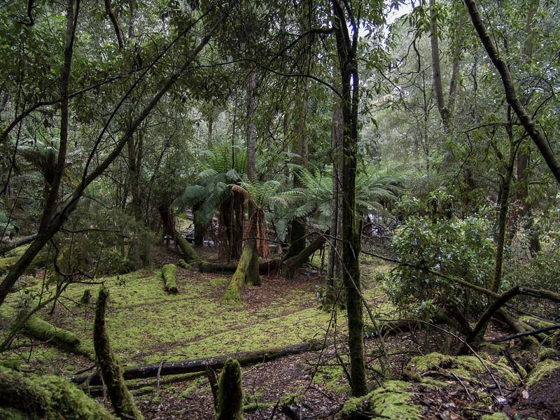 Australia-01900.jpg