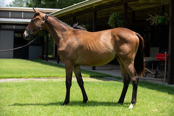 Elwing - 2020 TB filly