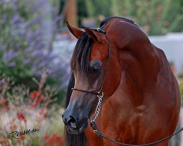 Hazlewood Arabians