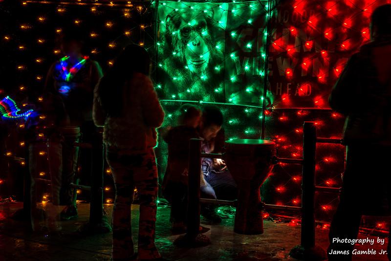 Houston-Zoo-Lights-3093.jpg