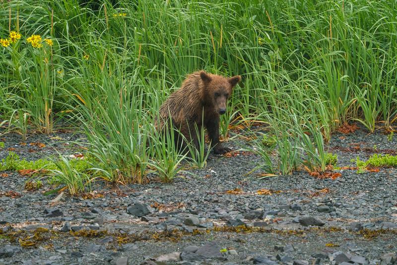 Alaska-224.jpg