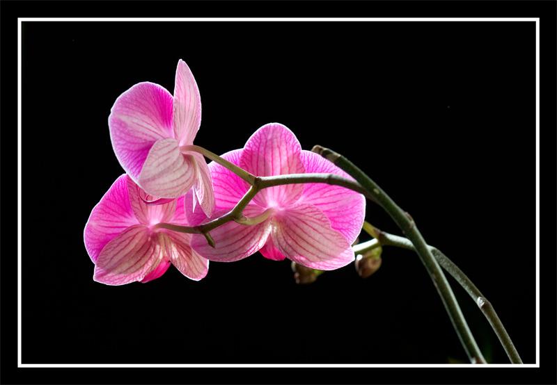 Orchid210107004.jpg