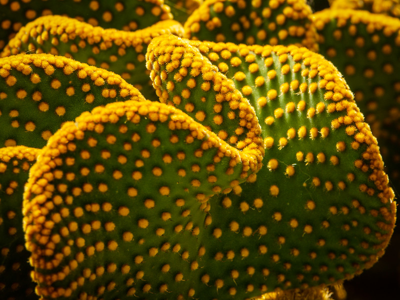 Cactus 3, Stanford University, California, 2005