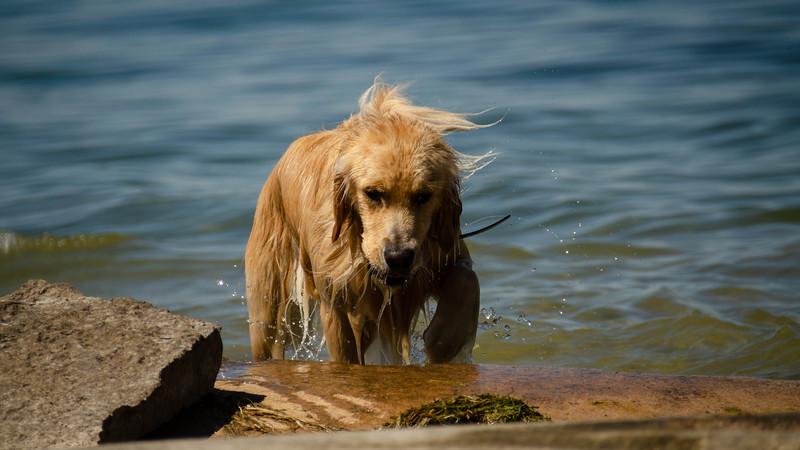 PuppyParty18-476.jpg
