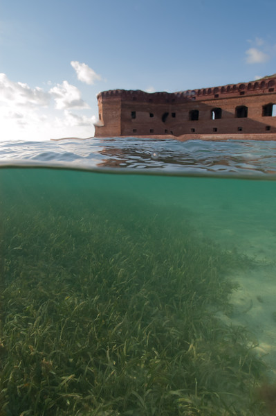 Sea grass in the shallows of Fort Jefferson