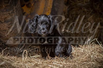 Webb Pups