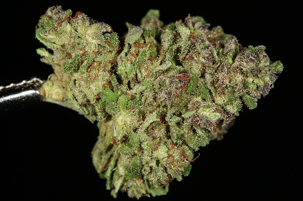 . No. 11: Blueberry (Ry Prichard, The Cannabist)