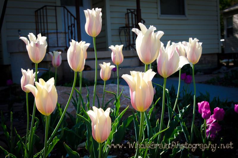 20120504_Garden_0001.jpg