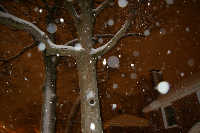 Snow, December 2007