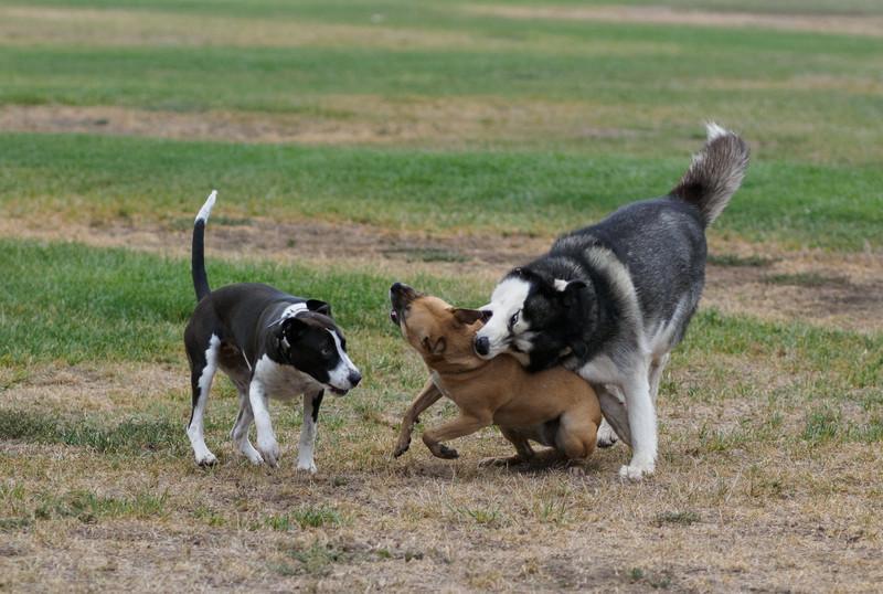 20140816_Dogs_46.jpg