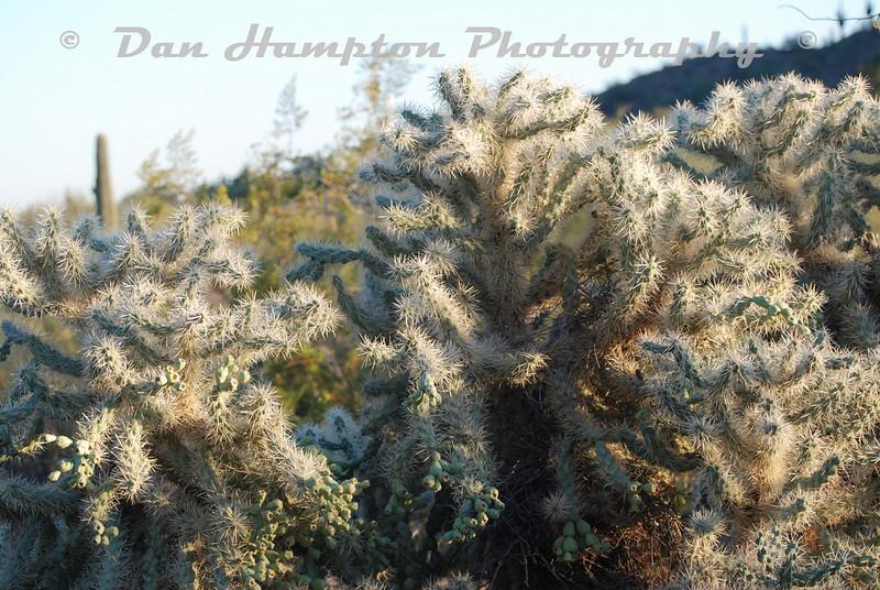 Desert Botanical_67.JPG
