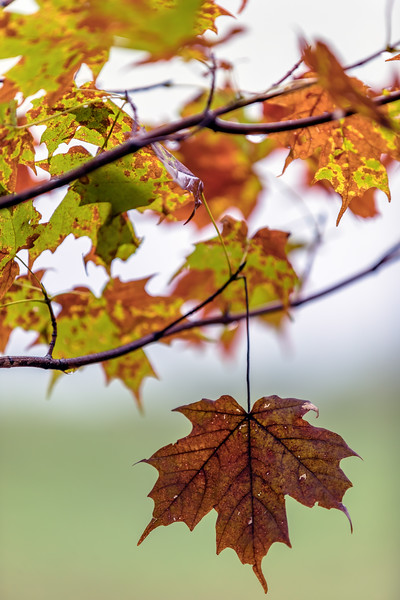 """""""The Colors of Fall"""""""