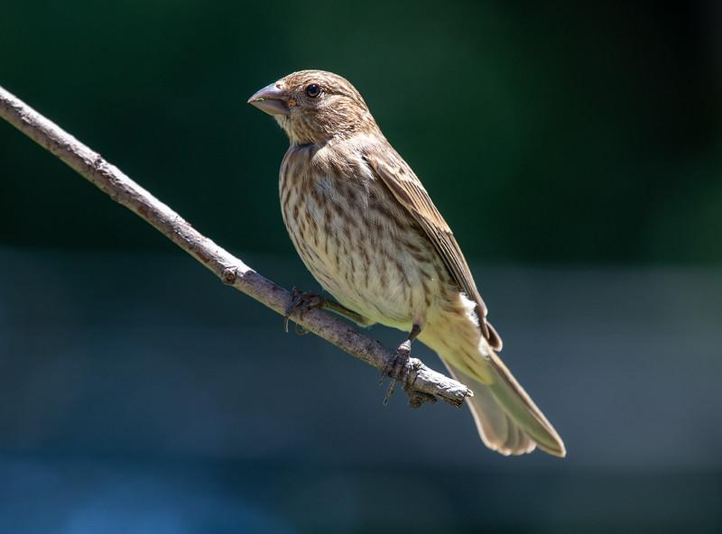 Bird-7.jpg