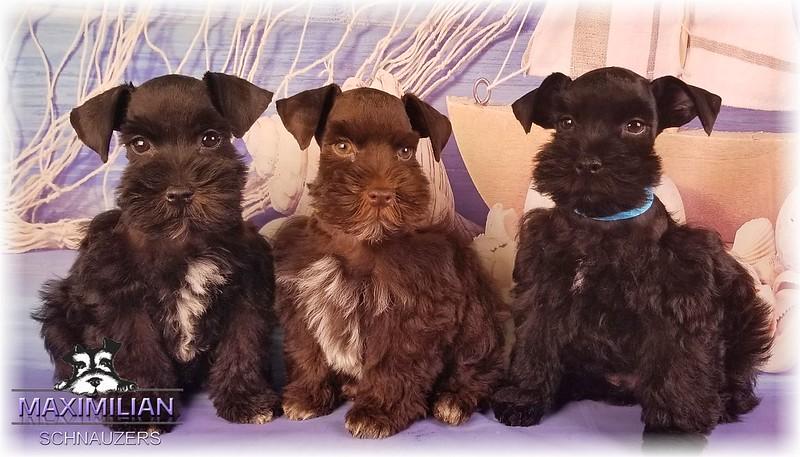 Annie Pups 020.jpg