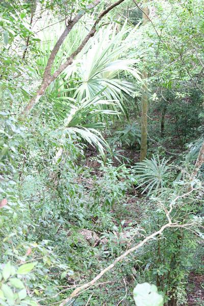 Guatemala Tikal 0 118.JPG