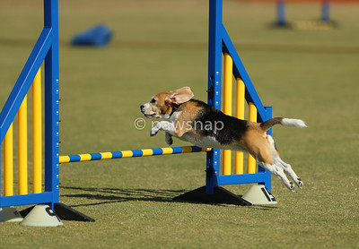 Redlands Agility Sep