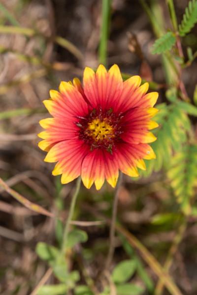 20190831-HobbsStatePark-Wildflower-1.jpg