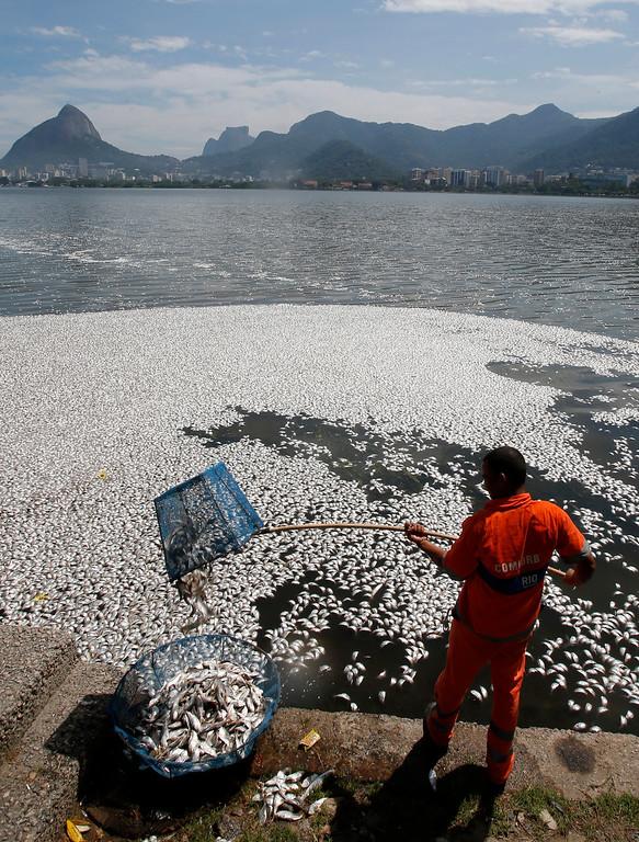 . A municipal worker collects dead fish at the Rodrigo de Freitas lagoon in Rio de Janeiro, March 13, 2013.  REUTERS/Sergio Moraes