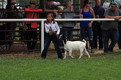 Misc Goat Show Pics