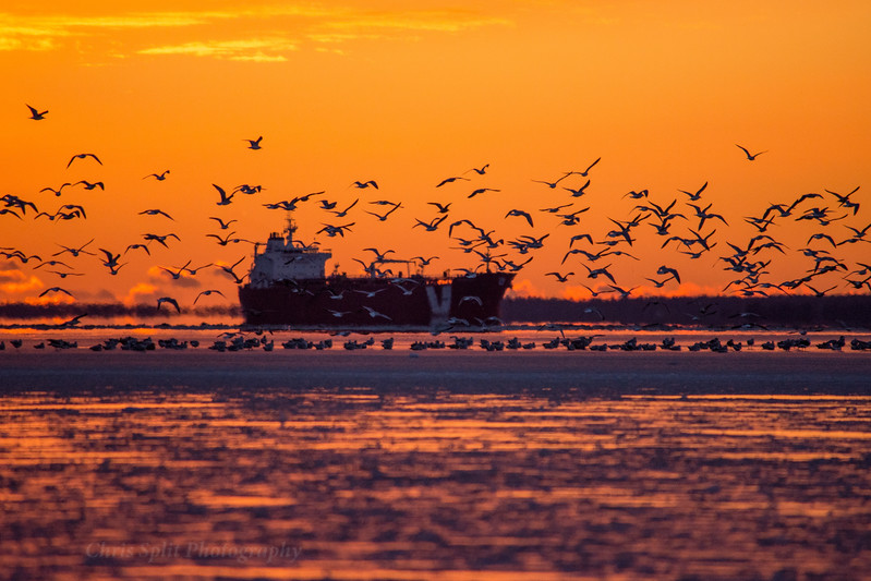 sunset dec 29 ship and birds 2 2017 (1 of 1).jpg